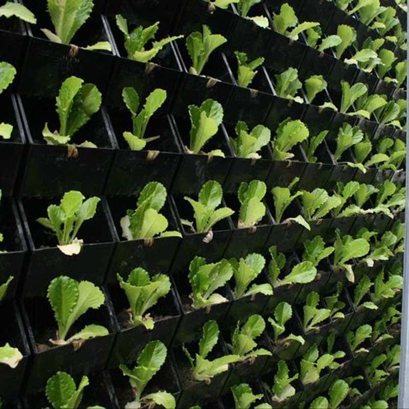 فروش اینترنتی گلدان دیوار سبز